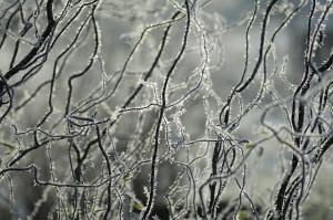 ice-498267_640