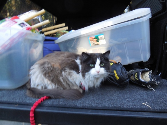 Motivation for Taking the Cat on a 10 Day Camping Trip?