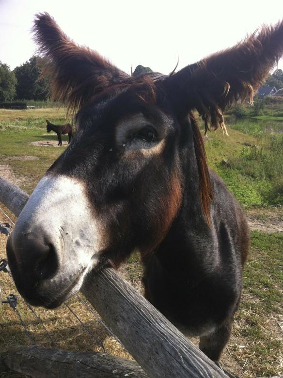 donkey-193263_1280