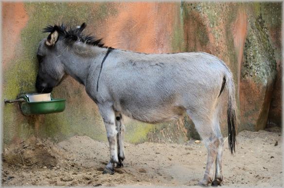 donkey-215885_1280