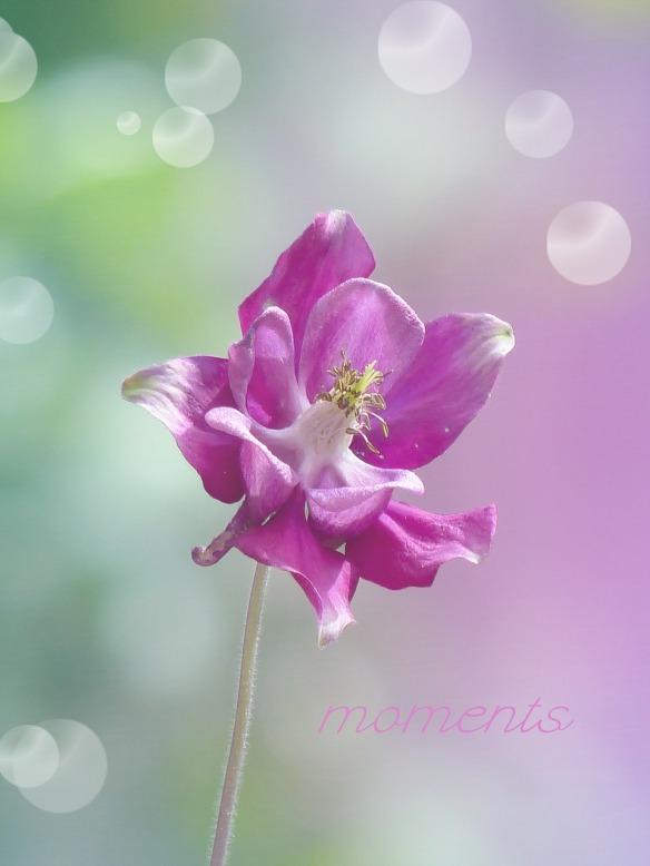 flower-603873_1280