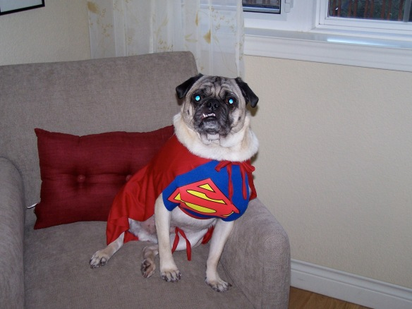 Where Is Super Pug When You Need Him?